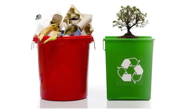 деревце на переработке мусора