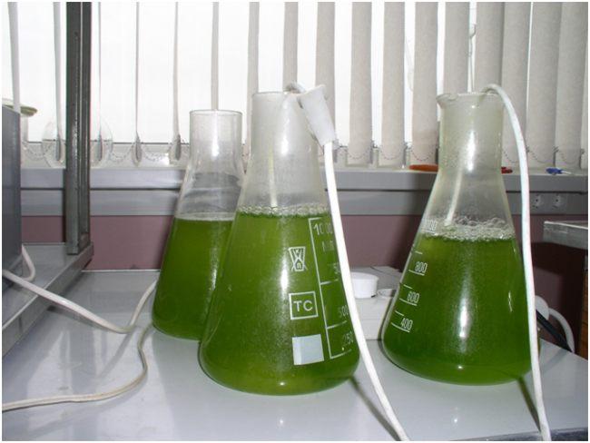 биотестирование вытяжек в колбах