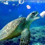 черепаха и мусор в воде