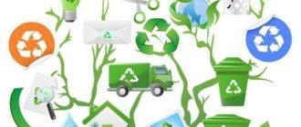 экологическое дерево рисунок