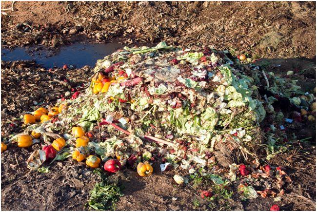 куча пищевых отходов на земле