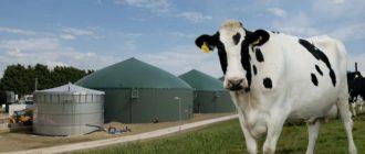 корова на фоне реактора