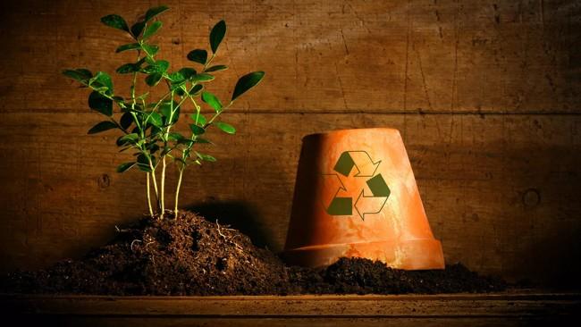 мусор и растение