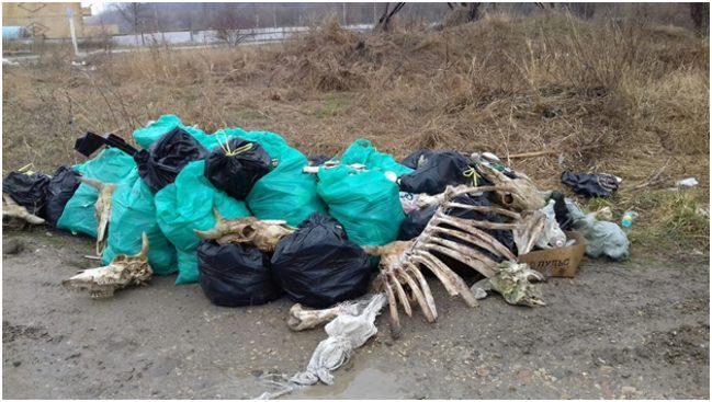 мусор из костей животных