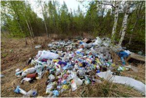 мусор среди берез