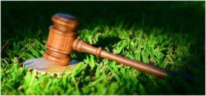 судебный молоток на траве