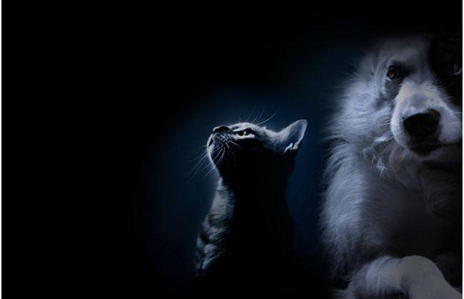 животные на темном фоне